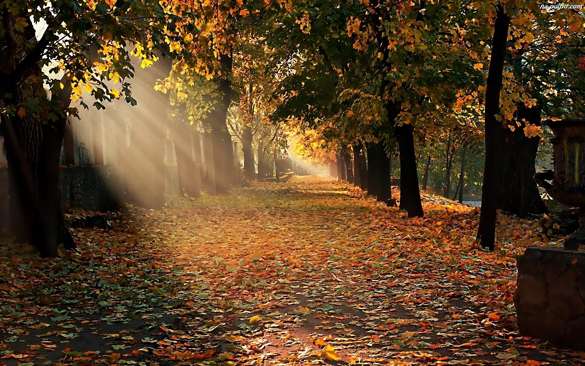 秋天的简笔画